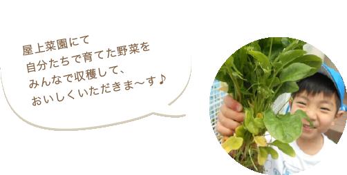 屋上菜園で自分たちで育てた野菜をみんなで収穫して、おいしくいただきま~す♪